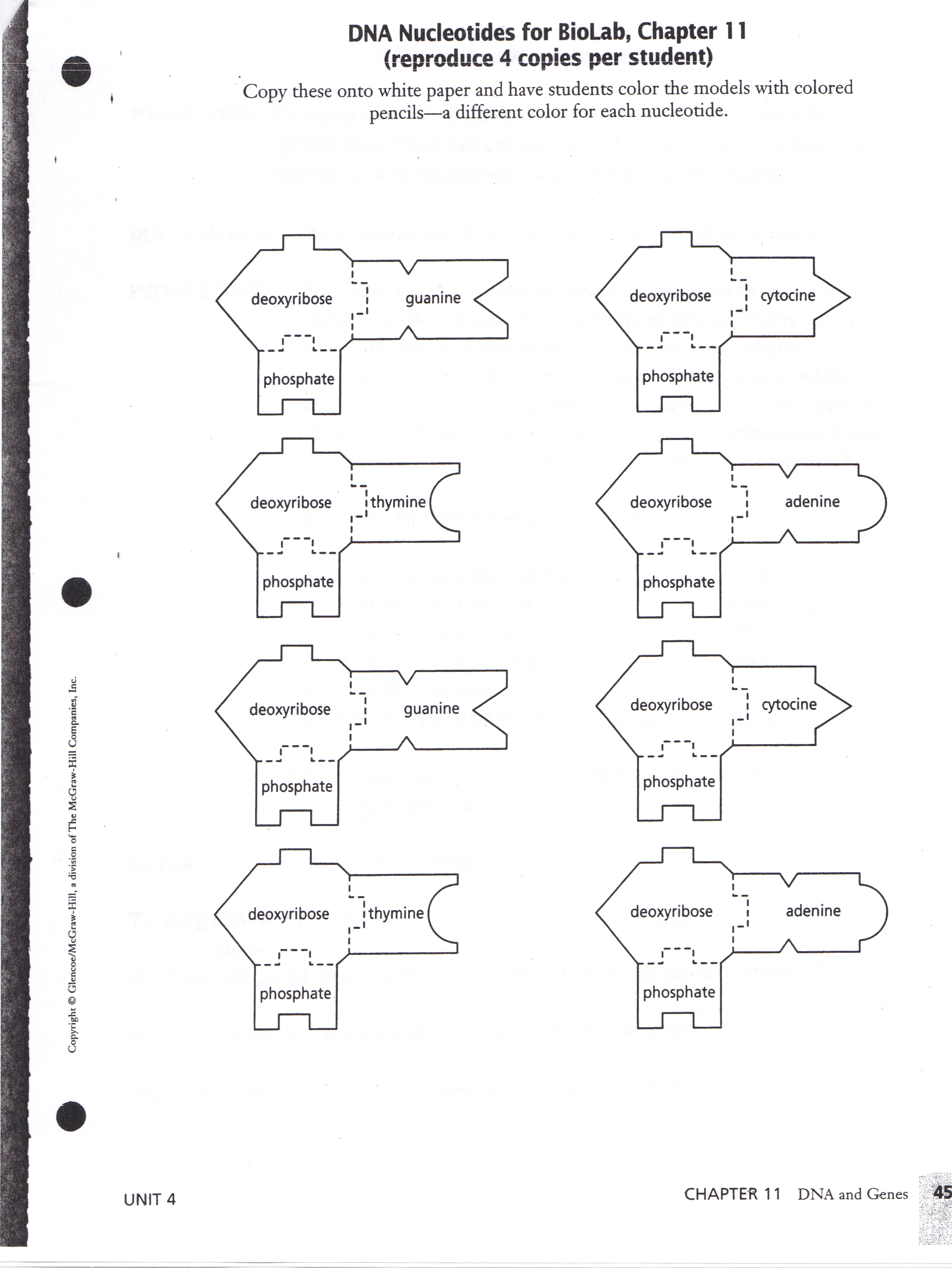 Dna and genes worksheet answers chapter 11