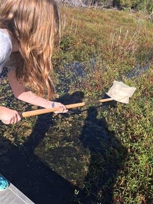 Students collect water samples.